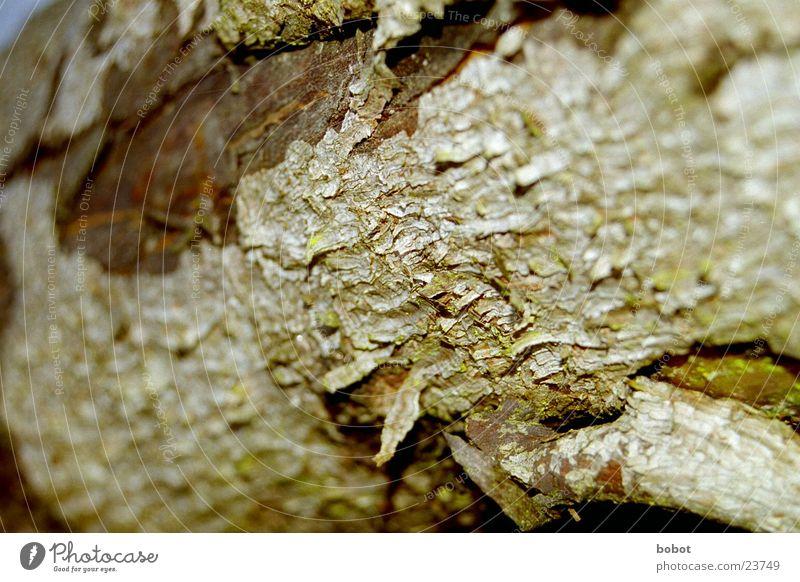 Baumhaut Baumrinde Holz Splitter rau Riss Pflanze braun grün whoiscocoon