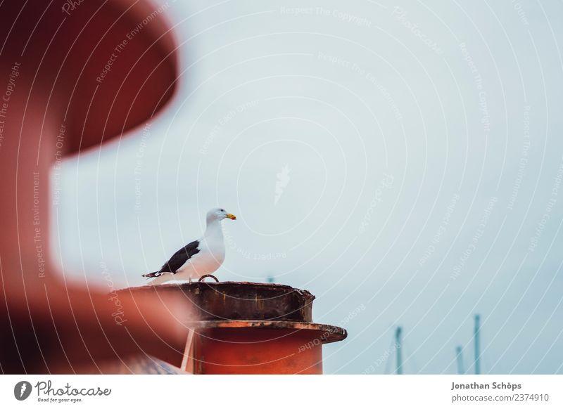 Möwe am Hafen Himmel Stadt Tier Einsamkeit ruhig Vogel Stimmung Luft Europa beobachten entdecken Hoffnung Vertrauen Vorsicht