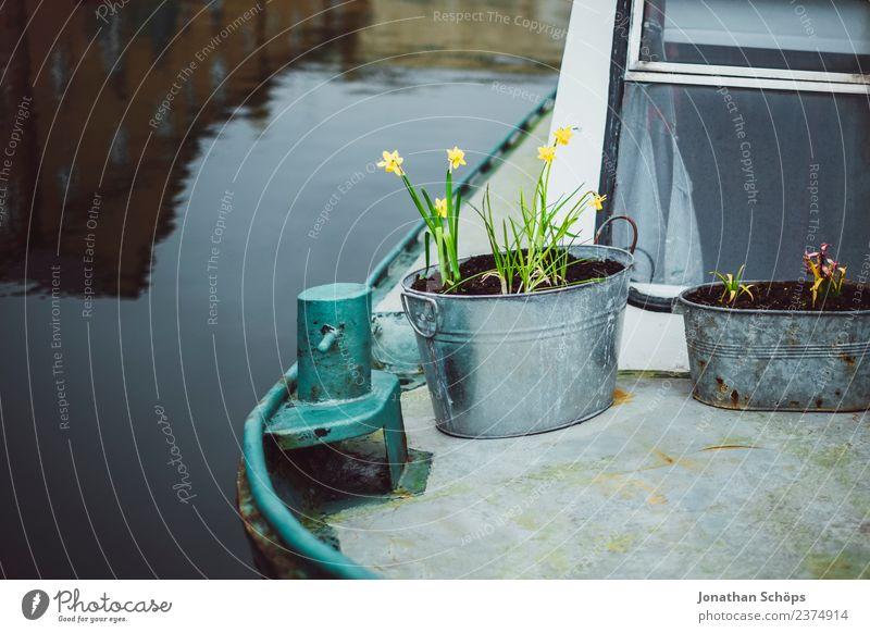 Blumen in Eimer auf einem Boot im Hafen Wasser Freude Lifestyle gelb Frühling Liebe Glück grau Wasserfahrzeug Zufriedenheit Metall Lebensfreude Blühend Hoffnung