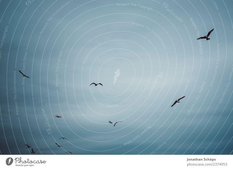 Möwen fliegen am Himmel Luft Wolken Küste Vogel Schwarm bedrohlich Ferne wild Stress Endzeitstimmung Horizont Perspektive Stimmung Tod träumen Traurigkeit