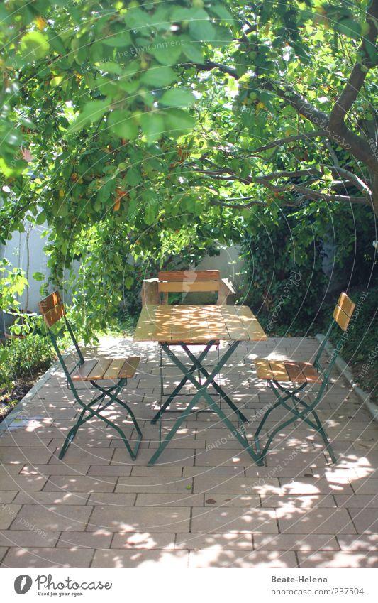 Unterm Apfelbaum Stil Garten Frühling Schönes Wetter Baum hell braun grün Schatten Gartentisch Gartenstuhl Wetterschutz Sitzgelegenheit Farbfoto Außenaufnahme