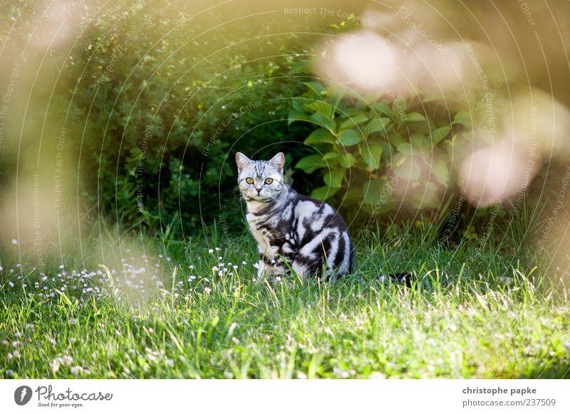 Wildkätzchen Katze Sommer Tier Gras Garten sitzen niedlich beobachten Neugier Wachsamkeit Interesse Schüchternheit Tierliebe freilebend Herumtreiben