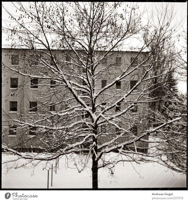 Schnee für die Seele Natur Landschaft Winter Wetter Baum Garten Dorf Haus Gebäude Wohnhaus Mehrfamilienhaus ästhetisch groß kalt trist Hof Kühlung
