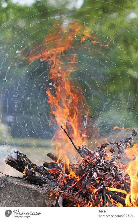 Feuer Umwelt Natur Urelemente Sommer Schönes Wetter Baum heiß Wärme gelb gold rot Freude gefährlich Feuerstelle Flamme brennen Grillsaison Grillplatz Grillen