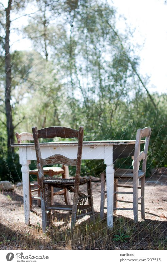Der alte Wuttke kommt nicht mehr Natur grün Baum Sommer ruhig Einsamkeit Erholung Gras Sand Traurigkeit sitzen Tisch authentisch Sträucher trist