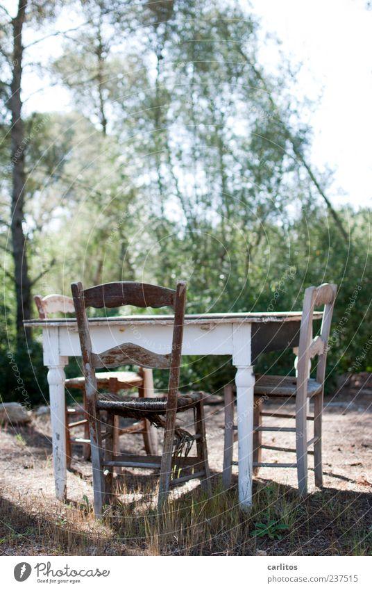 Der alte Wuttke kommt nicht mehr Sand Sommer Schönes Wetter Baum Gras Sträucher Erholung sitzen authentisch einfach trist grün Einigkeit ruhig Einsamkeit