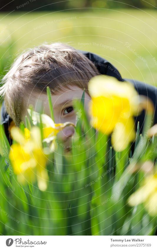 Kleiner Junge versteckt sich lächelnd hinter gelber Narzisse / Narzisse. Freude Freizeit & Hobby Spielen Freiheit Sonne Kindererziehung Kindheit Wiese blond