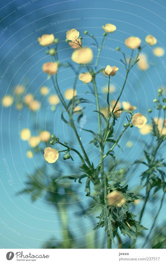 Über 600 Sommer Umwelt Pflanze Himmel Frühling Schönes Wetter Blume Blatt Blüte Blühend ästhetisch frisch hell blau gelb grün Farbe Perspektive Blütenknospen