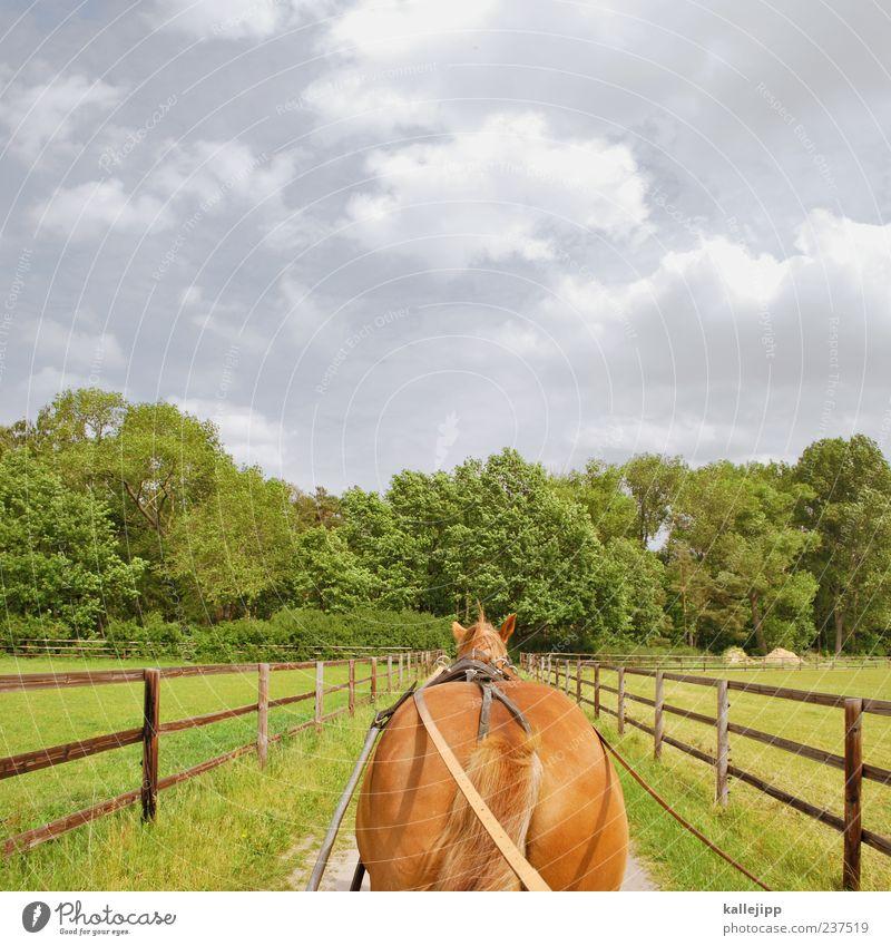 1 ps Himmel Natur Ferien & Urlaub & Reisen Baum Sommer Wolken Wald Ferne Umwelt Landschaft Wiese Freiheit Feld Freizeit & Hobby Ausflug Verkehr