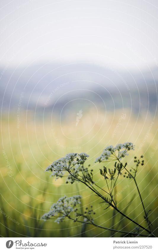 Fernsicht Himmel Natur Pflanze Sommer Blume Farbe Einsamkeit Umwelt Landschaft Wiese Berge u. Gebirge Frühling Freiheit Blüte Luft Stimmung