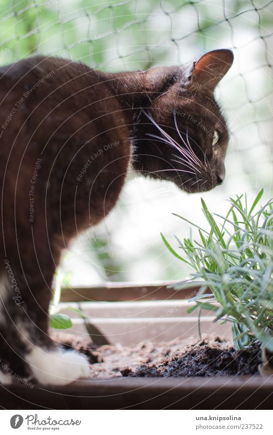 kräuterkatze Katze Natur grün weiß Pflanze Tier schwarz Garten authentisch frisch beobachten Kräuter & Gewürze Balkon lecker entdecken Haustier