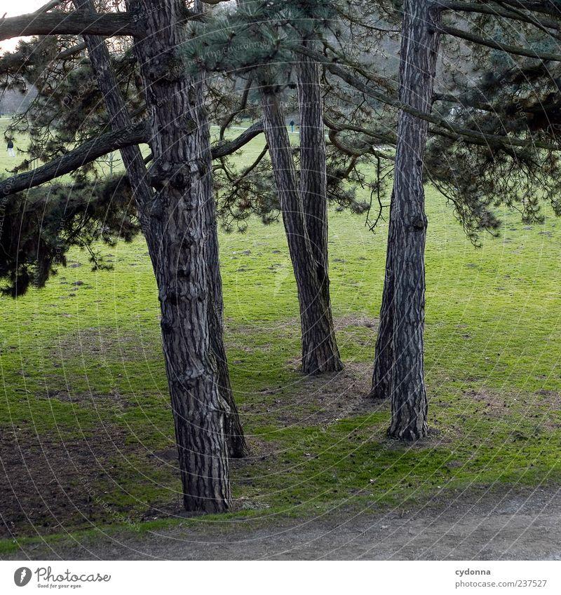 Zusammen Natur Baum Erholung Einsamkeit Landschaft ruhig Ferne Wald kalt Umwelt Leben Wiese Gras Wege & Pfade Zeit Park