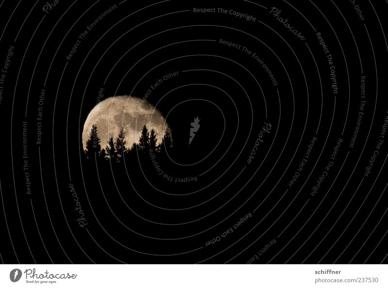 Auuuuuuuuu Baum schwarz Wald Landschaft dunkel Angst Hügel Tanne Mond Nachthimmel unheimlich Nachtaufnahme Grauen Mondschein Fabelwesen