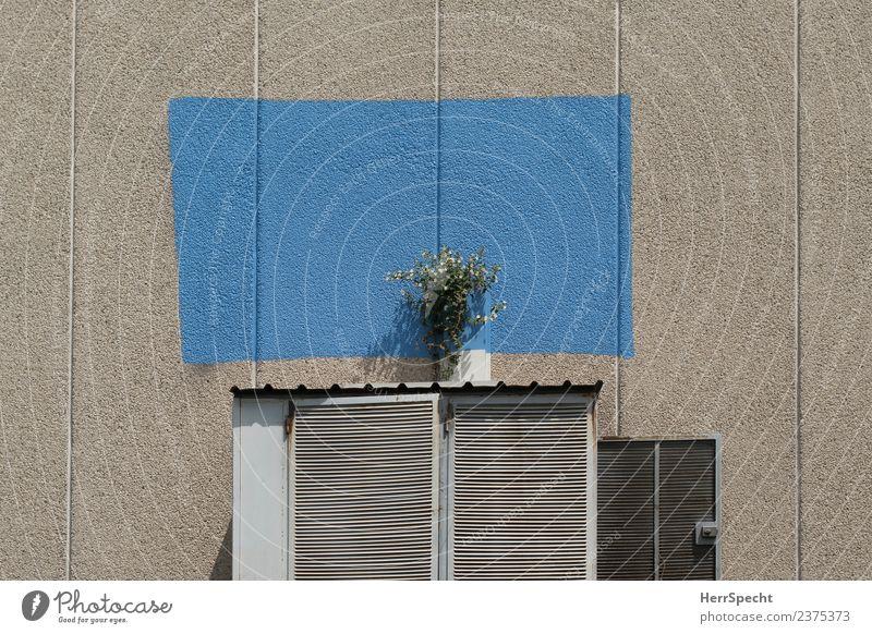 Minimal Garden Pflanze blau Stadt Blume Haus Wand Blüte Gebäude Mauer Garten außergewöhnlich grau trist verrückt Bauwerk trashig