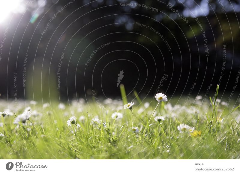Wiesenromantik 2 Natur weiß grün Pflanze Sommer Erholung Wiese Leben Frühling Gras Garten Blüte Park Freizeit & Hobby Wachstum leuchten