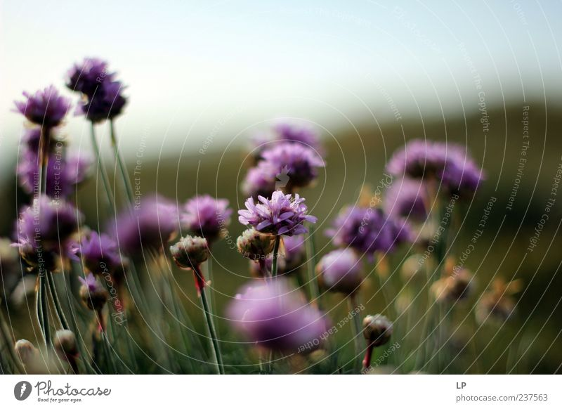 Natur schön Blume Pflanze Sommer Leben Gefühle Blüte Umwelt frisch Reinheit