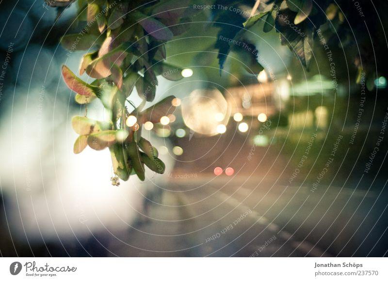 urbane Blätter Natur Ferien & Urlaub & Reisen Pflanze Blatt ruhig Umwelt Straße Wege & Pfade träumen Zufriedenheit Verkehr ästhetisch leer Idylle Dresden