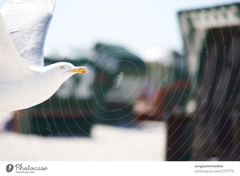 Fly, little bird Natur Wasser weiß Ferien & Urlaub & Reisen Meer Sommer Strand Tier Umwelt Bewegung Küste Freiheit Vogel Kraft fliegen Wildtier