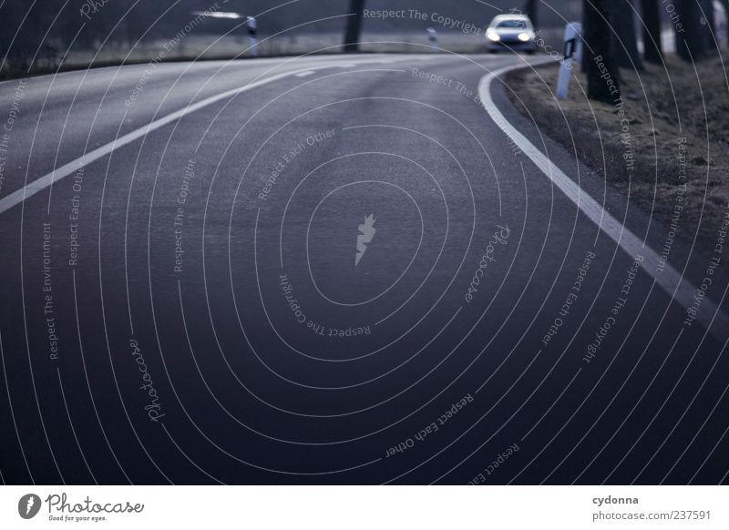 Gegenverkehr Baum Straße Bewegung Wege & Pfade PKW Straßenverkehr Schilder & Markierungen Zeit Verkehr Geschwindigkeit Ausflug Ziel Asphalt Kurve Autofahren Erwartung