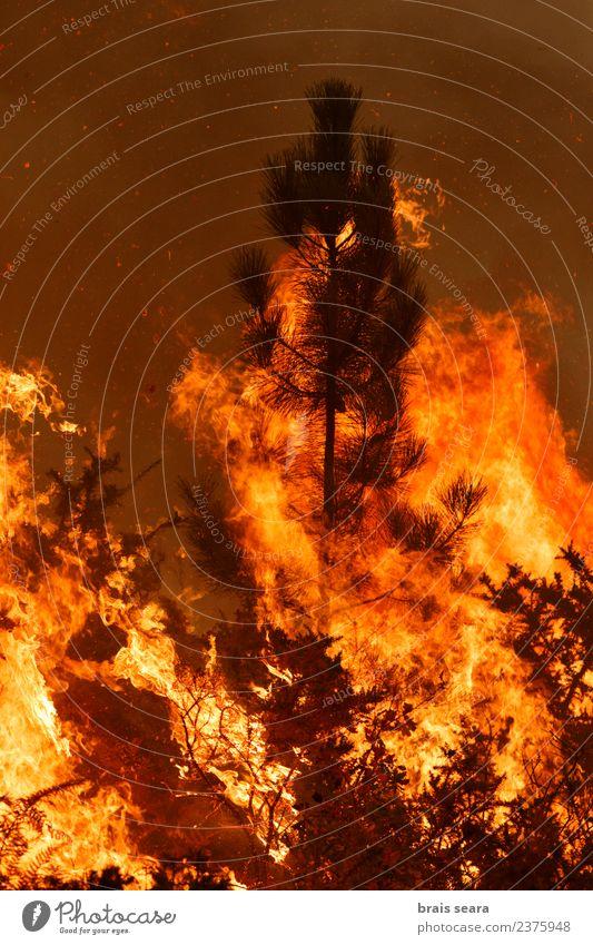 Natur Landschaft Baum rot Wald Umwelt Traurigkeit natürlich orange Arbeit & Erwerbstätigkeit wild Angst Wind gefährlich Feuer Landwirtschaft