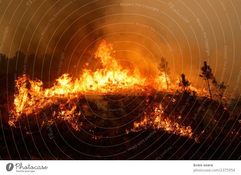 Natur Pflanze Landschaft Baum Wald Umwelt natürlich Erde Arbeit & Erwerbstätigkeit wild Wind gefährlich Feuer Landwirtschaft Bildung Beruf
