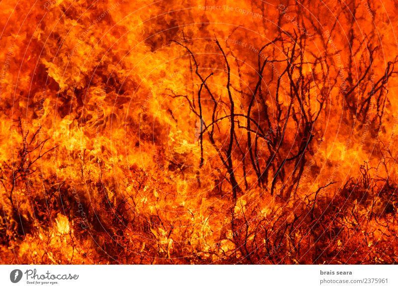 Natur Pflanze Landschaft Baum Wald Umwelt natürlich Arbeit & Erwerbstätigkeit wild Wind gefährlich Feuer Landwirtschaft Bildung Spanien heiß