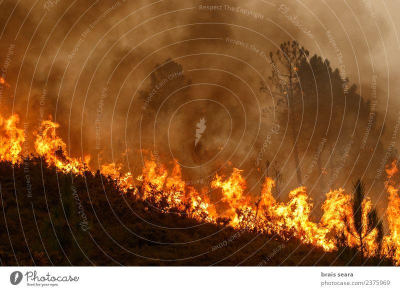 Natur Landschaft Baum Wald Umwelt natürlich Holz Arbeit & Erwerbstätigkeit wild Angst Wind gefährlich Feuer Todesangst Landwirtschaft Bildung