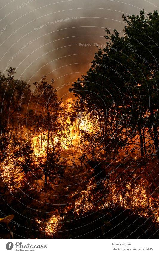 Waldbrand Landwirtschaft Forstwirtschaft Umwelt Natur Landschaft Feuer Klimawandel Wind Baum heiß natürlich wild orange rot schwarz Traurigkeit Angst Entsetzen