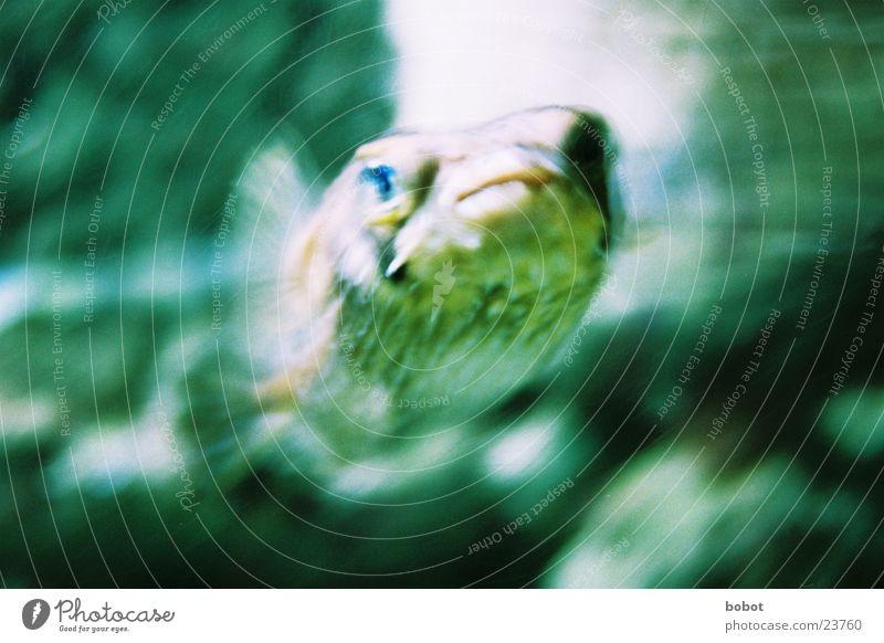 Vorsicht vor dem Fisch Wasser See tauchen Zoo blasen Aquarium Schwimmhilfe Stachel Meeresfrüchte Meerestier Kugelfisch