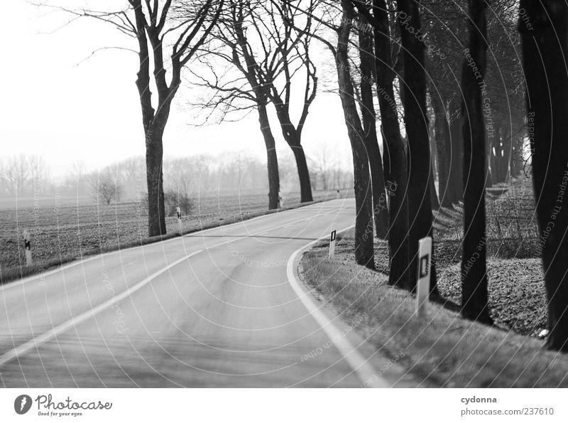 Allee Himmel Natur Ferien & Urlaub & Reisen Baum ruhig Einsamkeit Ferne Umwelt Landschaft Straße Bewegung Wege & Pfade Freiheit Horizont Zeit Feld