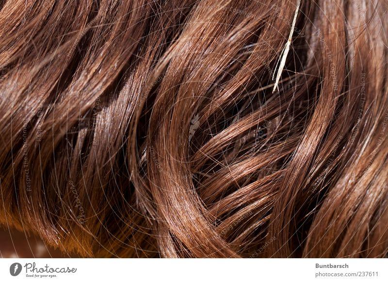 schönes Haar ist dir gegeben feminin Haare & Frisuren brünett langhaarig Locken wellig braun Halm Farbfoto Außenaufnahme rothaarig rotbraun Haarsträhne