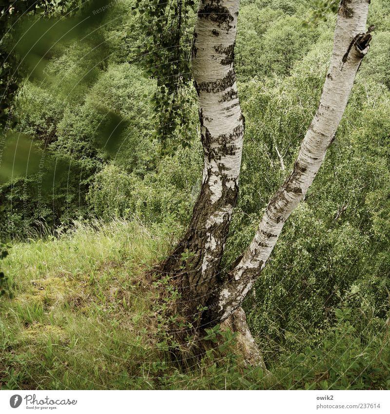 Grüner Wind Natur weiß Baum grün Pflanze Blatt schwarz Wald Bewegung grau Landschaft Umwelt Luft Wetter Wachstum