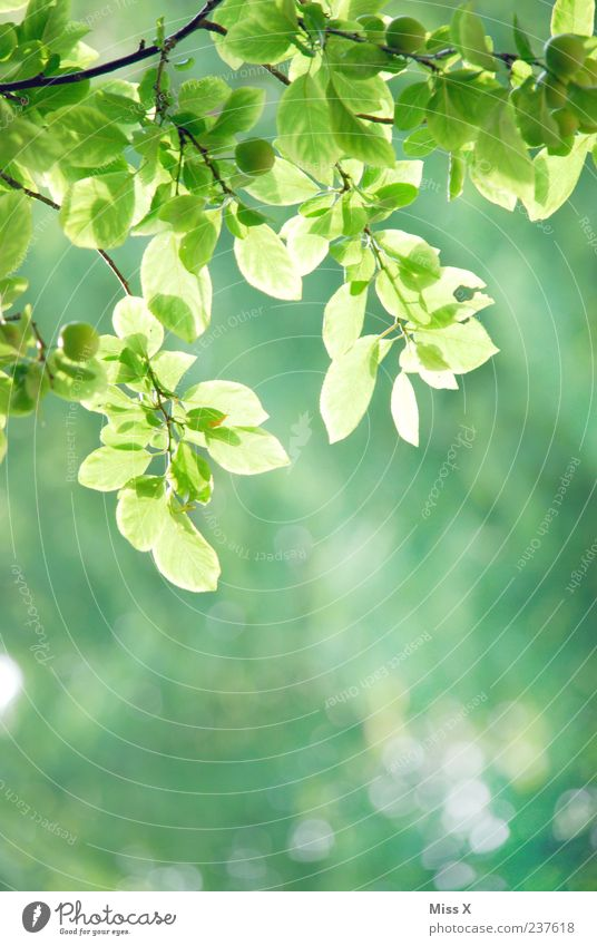 Frühlingsgrün Schönes Wetter Sträucher Blatt Park Wachstum Ast Zweige u. Äste zartes Grün Frühlingsfarbe Farbfoto mehrfarbig Außenaufnahme Nahaufnahme