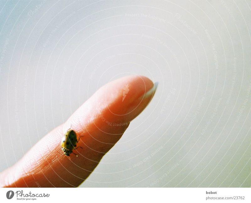 Buggie Haut klein Finger Insekt Marienkäfer Käfer krabbeln
