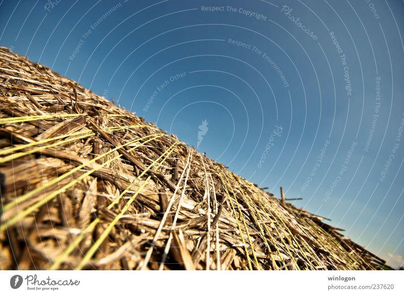 Himmel Natur Pflanze Sommer Umwelt Luft Kunst Deutschland Horizont Arbeit & Erwerbstätigkeit Feld Wachstum gut Idylle Dorf Landwirtschaft