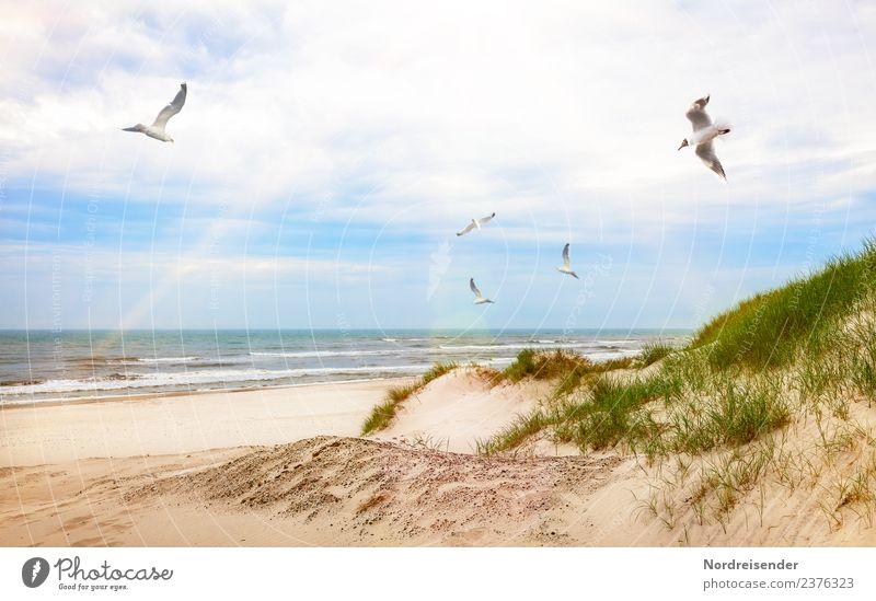 Möwen über Strand und Dünen Ferien & Urlaub & Reisen Sommer Wasser Landschaft Sonne Meer Tier Wolken Gras Tourismus Vogel Sand Wellen frisch Schönes Wetter