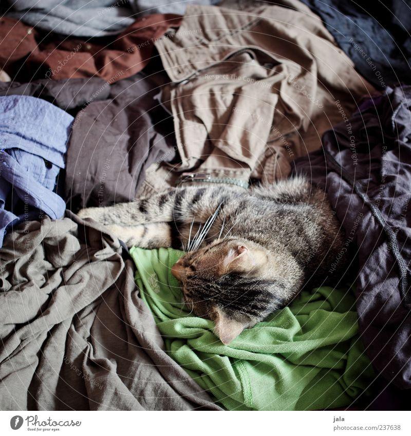 chaos Katze Tier außergewöhnlich liegen schlafen Bekleidung Stoff durcheinander Haustier kuschlig unordentlich
