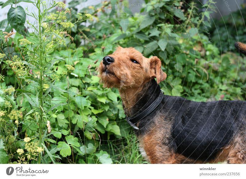 william winston Hund grün Tier schwarz braun niedlich Haustier Hundeschnauze Hundeblick
