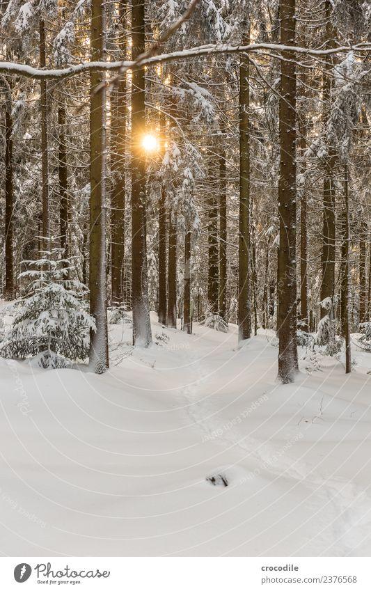 Der Weg II Winterwald Schneelandschaft Farbfoto Fichte Wald Bayerischer Wald Gegenlicht Sonne Sonnenuntergang kalt Spuren ruhig weiß Ast braun Schneeschuhe