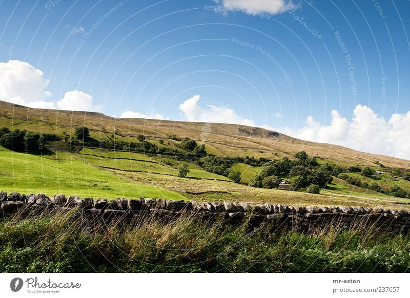 Himmel Natur grün blau Baum Pflanze Wolken Wiese Herbst Landschaft Gras Erde hell Feld Horizont