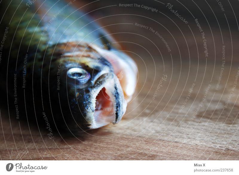 Fisch am Morgen Lebensmittel liegen frisch nass Tod Forelle roh Maul Farbfoto Innenaufnahme Nahaufnahme Menschenleer Textfreiraum rechts Licht Schatten