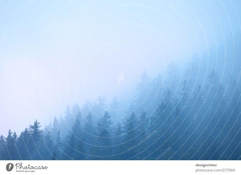 like the first morning Umwelt Natur Landschaft Wolken Wetter Nebel Baum Wald Hügel Berge u. Gebirge kalt blau Stimmung ruhig Dunst unklar schemenhaft Morgen