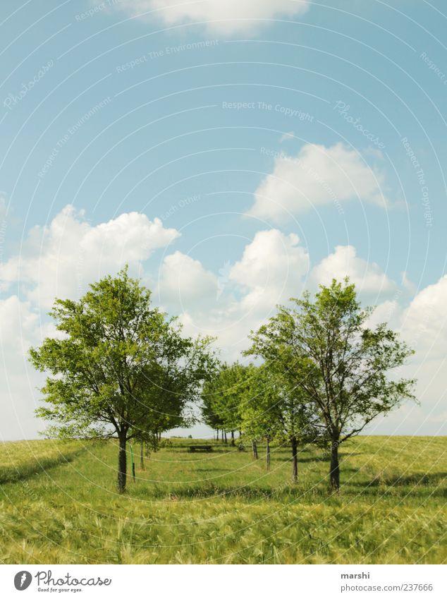 im Grünen Natur Landschaft Pflanze Himmel Frühling Sommer Klima Wetter Schönes Wetter Baum Gras Sträucher blau grün Erholung Erholungsgebiet Wolken Wolkenhimmel
