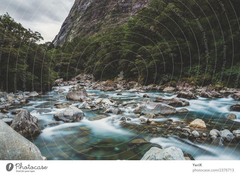 wild Ferien & Urlaub & Reisen Ausflug Abenteuer Ferne Freiheit Natur Pflanze Urelemente Wasser Sommer Urwald Flussufer Bach weich Kraft Willensstärke Neuseeland