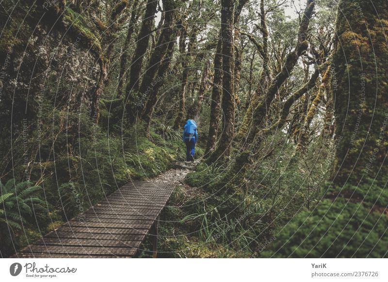 keep going Natur Landschaft Pflanze Frühling Sommer Klima Wetter schlechtes Wetter Regen Urwald gehen wandern nass grün Abenteuer Fitness Fortschritt Freiheit