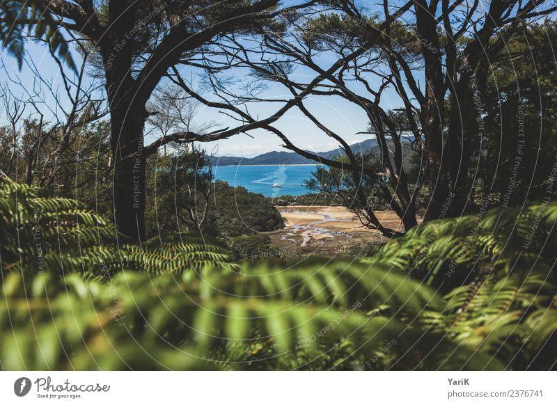 Abel Tasman Ferien & Urlaub & Reisen Tourismus Ausflug Abenteuer Ferne Freiheit Sommer Sommerurlaub Sonne Strand Meer Insel wandern Natur Pflanze Sand Wasser