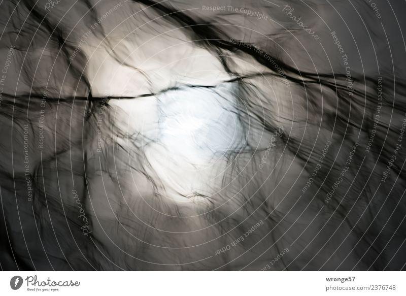 Junk | graue Zeit Natur Wasser Herbst Teich See natürlich träumen Traurigkeit Oberfläche Reflexion & Spiegelung Ast Zweige u. Äste Linie Unschärfe Querformat