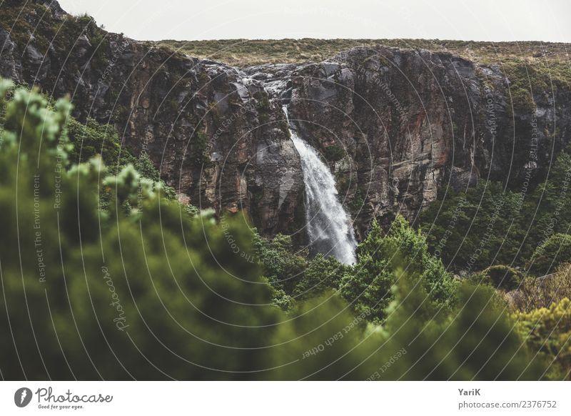 Taranaki Falls Natur Landschaft Pflanze Urelemente Wasser Sommer schlechtes Wetter Wald Urwald Hügel Felsen Wasserfall wild taranaki tongariro