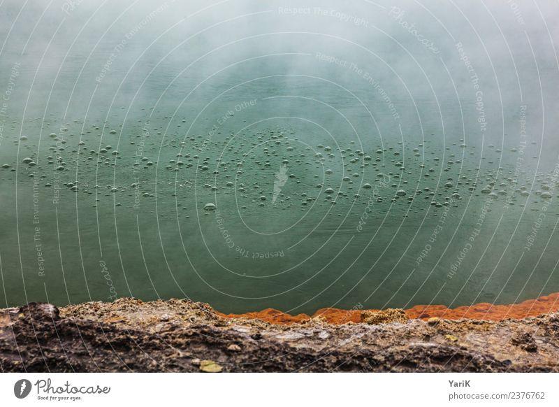 brodeln Ferien & Urlaub & Reisen Tourismus Ausflug Abenteuer Ferne Freiheit Sightseeing Umwelt Urelemente Erde Wasser Klima Moor Sumpf Teich See außergewöhnlich