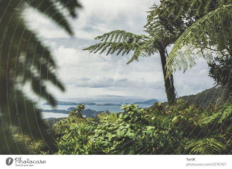 Coromandel Himmel Natur Ferien & Urlaub & Reisen Sommer Pflanze grün Sonne Baum Meer Wolken Strand Ferne Küste Tourismus Freiheit Ausflug